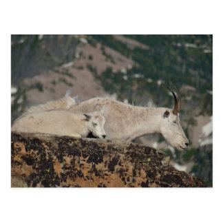 """~ """"cabras de la POSTAL de montaña en pico del esco"""