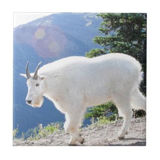 Cabras de montaña azulejo cuadrado pequeño