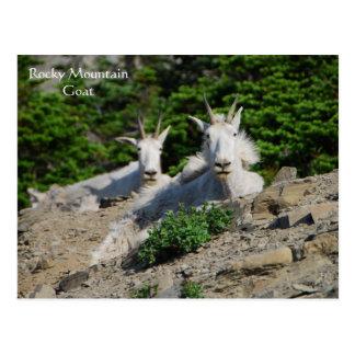 Cabras de montaña en series de la fauna de la repi postales