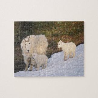 cabras de montaña, Oreamnos americanus, madre y Puzzles