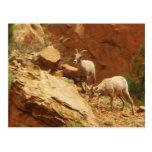 Cabras de montaña postal