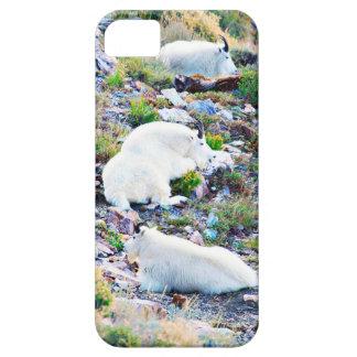 Cabras de montaña rocosa iPhone 5 cobertura