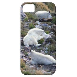 Cabras de montaña rocosa iPhone 5 protectores