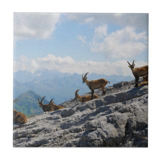 Cabras de montaña salvajes del cabra montés alpino tejas  ceramicas