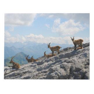 Cabras de montaña salvajes del cabra montés alpino bloc de papel