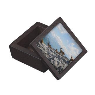 Cabras de montaña salvajes del cabra montés alpino caja de joyas de calidad