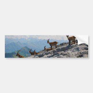 Cabras de montaña salvajes del cabra montés alpino etiqueta de parachoque