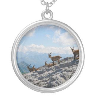 Cabras de montaña salvajes del cabra montés alpino grimpola personalizada