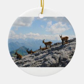Cabras de montaña salvajes del cabra montés alpino ornato