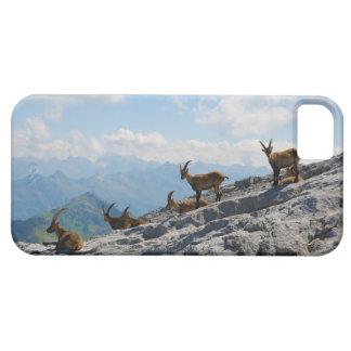 Cabras de montaña salvajes del cabra montés alpino iPhone 5 carcasa