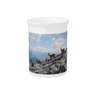 Cabras de montaña salvajes del cabra montés alpino jarras de beber