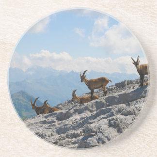 Cabras de montaña salvajes del cabra montés alpino posavasos cerveza