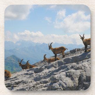 Cabras de montaña salvajes del cabra montés alpino posavasos de bebida