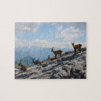 Cabras de montaña salvajes del cabra montés alpino puzzle