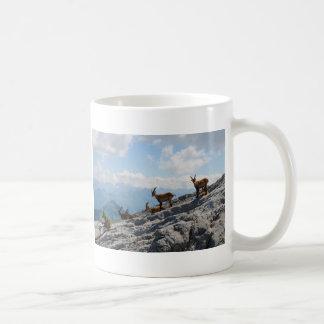 Cabras de montaña salvajes del cabra montés alpino tazas