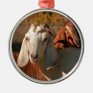 Cabras de Nubian Ornamentos De Navidad