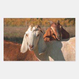 Cabras de Nubian Rectangular Pegatinas