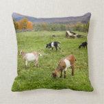 Cabras de Vermont Almohada