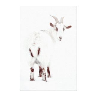 Cabras del navidad lona envuelta para galerias