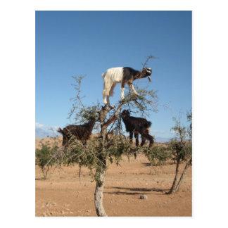 Cabras divertidas en un árbol tarjeta postal