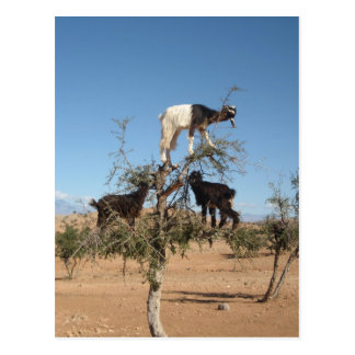 Cabras divertidas en un árbol tarjetas postales