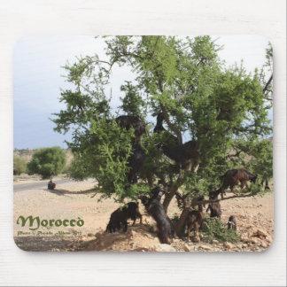 Cabras en los árboles - árboles del Argan Marruec Tapetes De Ratones