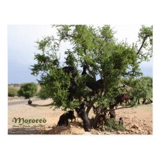 Cabras en los árboles - árboles del Argan Marruec Postal