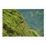 Cabras en una ladera muy escarpada postal