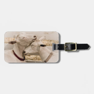 Cabras Snuggling Etiquetas Para Maletas