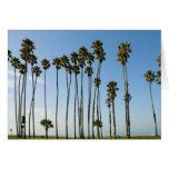 Cabrillo Avenue, Santa Barbara, California Card