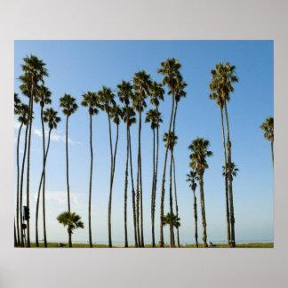 Cabrillo Avenue, Santa Barbara, California Poster