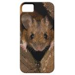 Cacahuete el ratón de madera iPhone 5 cobertura