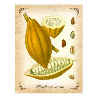 Cacao - ejemplo del vintage tarjeta postal