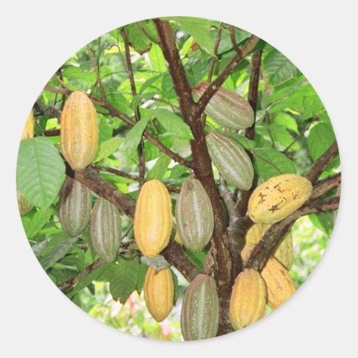 Cacao Etiquetas