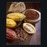 "Cacao pod containing cacao beans which are photo print<br><div class=""desc"">Cacao pod containing cacao beans which are processed to get the cacao powder (For use in USA only) � Mond&#39;Image / DanitaDelimont.com</div>"