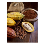 Cacao pod containing cacao beans which are post cards
