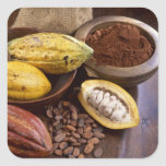 Cacao pod containing cacao beans which are stickers
