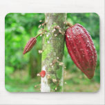 Cacao Tapetes De Ratones