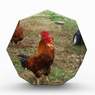 Cacareo del gallo