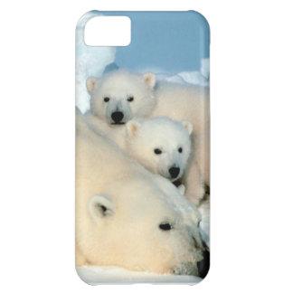 Cachorro 1 del oso polar funda iPhone 5C