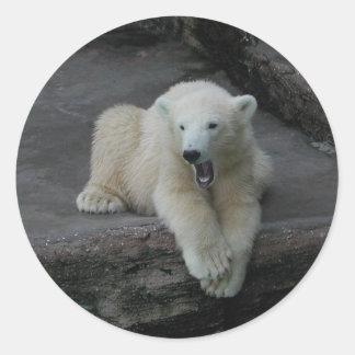 Cachorro de bostezo del oso polar pegatina redonda