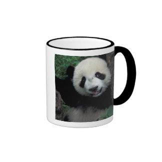 Cachorro de la panda con el árbol, Wolong, Taza De Dos Colores