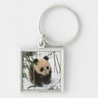 Cachorro de la panda en la nieve, Wolong, Sichuan, Llavero Cuadrado Plateado