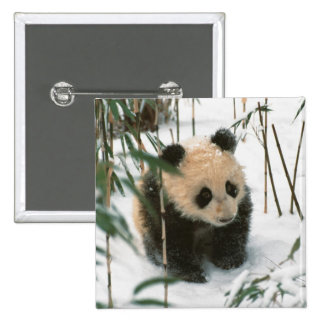 Cachorro de la panda en la nieve, Wolong, Sichuan, Pins