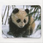 Cachorro de la panda en la nieve, Wolong, Sichuan, Alfombrilla De Ratón