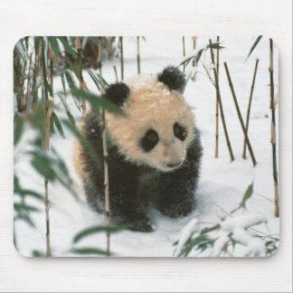 Cachorro de la panda en la nieve, Wolong, Sichuan, Alfombrilla De Raton