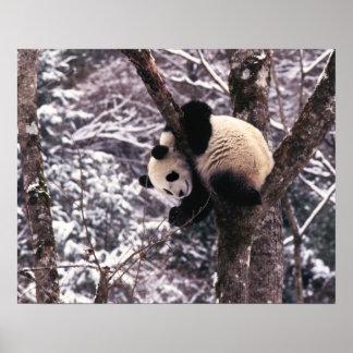 Cachorro de la panda que juega en el árbol cubiert posters
