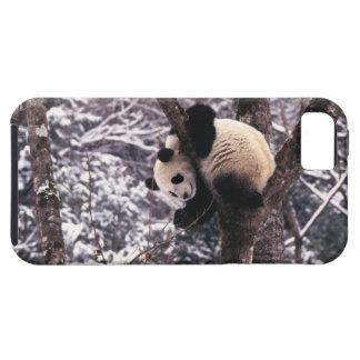 Cachorro de la panda que juega en el árbol iPhone 5 carcasa
