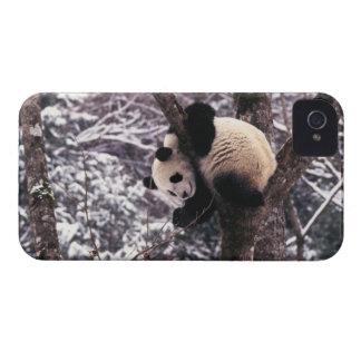 Cachorro de la panda que juega en el árbol iPhone 4 Case-Mate coberturas