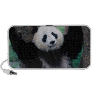 Cachorro de la panda, Wolong, Sichuan, China Laptop Altavoces